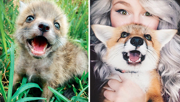 Ismerd meg Junipert, a rókakölyköt, aki igazából csak egy vörös bundájú kutyus