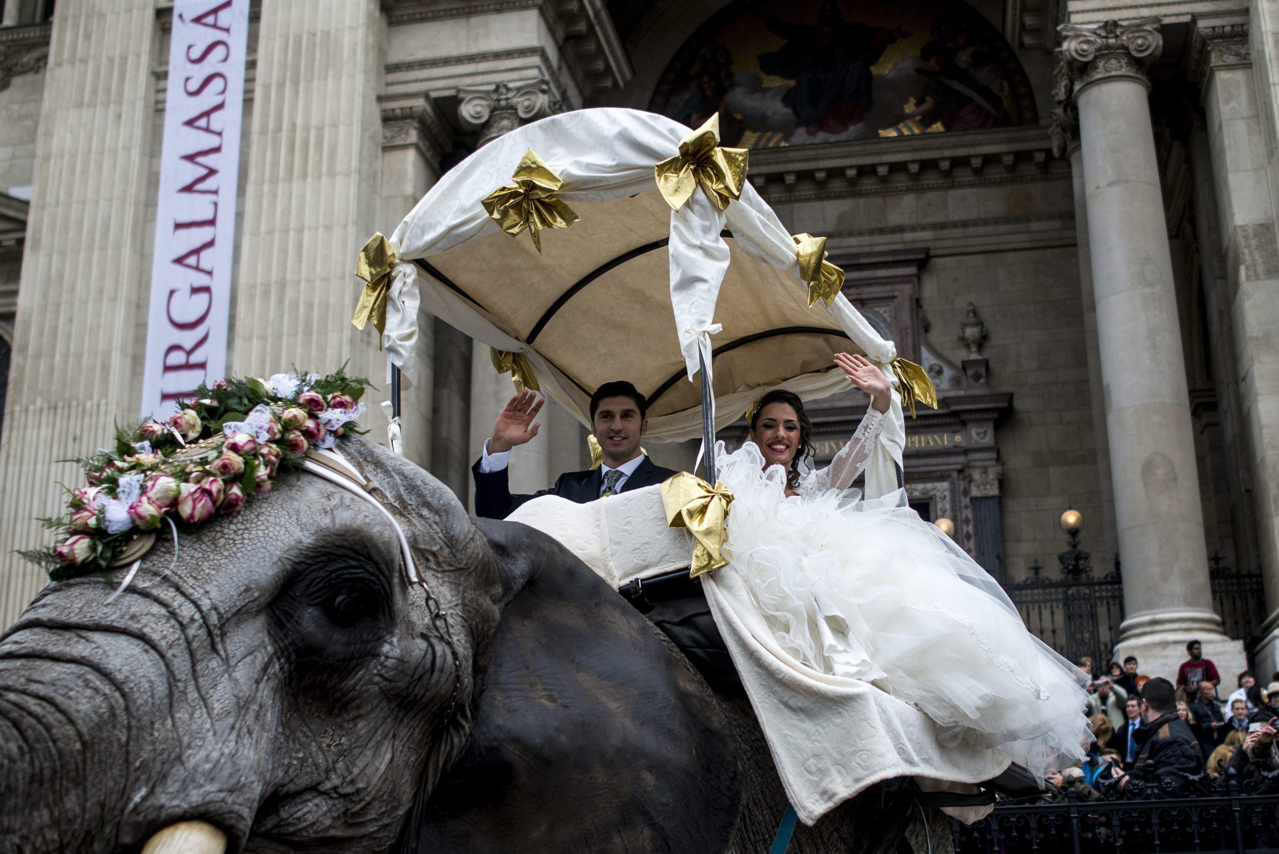 Elefánt várta a Valentin-napon egybekelt artista párt a Bazilikánál