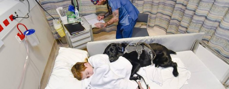 Még a kórházi ágyon se hagyta magára az autista kisfiút a hűséges kutyus