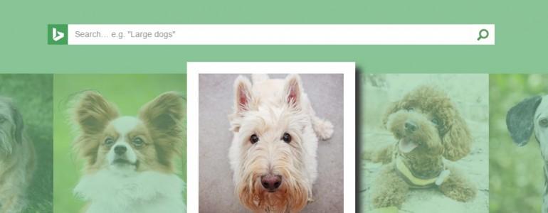 Végre egy oldal, ami fotó alapján megmondja a kutya fajtáját