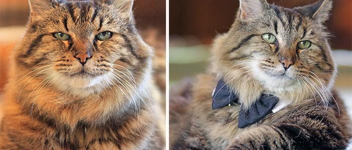 Az élet minden bölcsessége ott van a világ legöregebb cicájának tekintetében