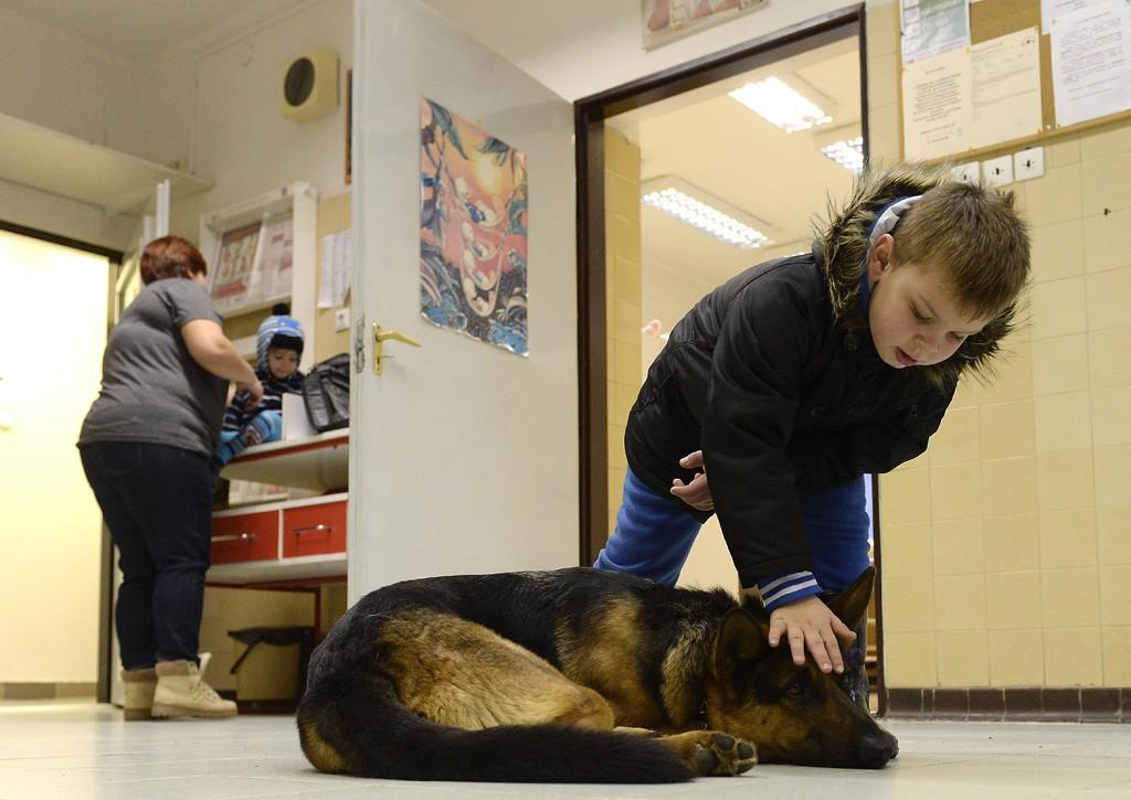 Budapest, 2016. február 10. Egy fiú játszik Rexszel, Varga Károly gyermekorvos kutyájával az óbudai Ányos utcai gyermekorvosi rendelőben 2016. február 10-én. A terápiás minősítéssel rendelkező német juhász minden rendelésre elkíséri gazdáját, ahol neki is szerepe van, megnyugtatja a gyerekeket, leköti a figyelmüket. MTI Fotó: Kovács Tamás