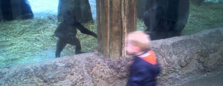 Ez a kisfiú bebizonyítja, hogy nem is különbözünk annyira a gorilláktól
