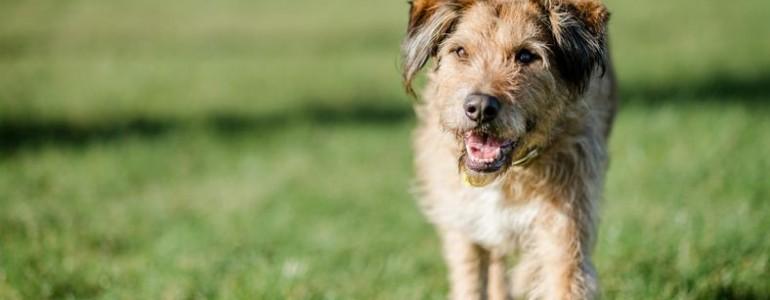 Megindító reklám mutatja be a menhelyi kutyusok egyetlen kívánságát