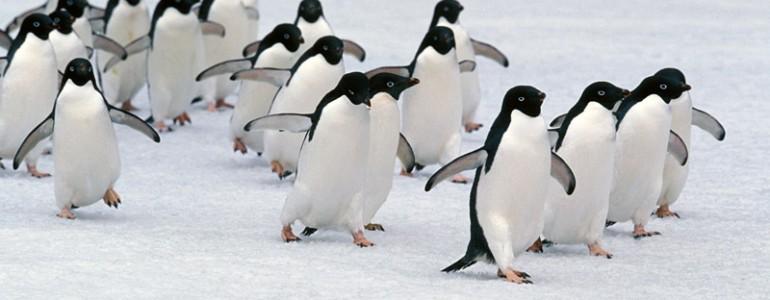Mintegy 150 ezer pingvin pusztult el a Déli-sarkon