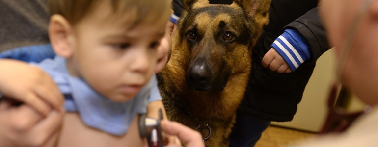 Kitiltották az óbudai rendelőből Rexet, a gyerekeket segítő kutyát
