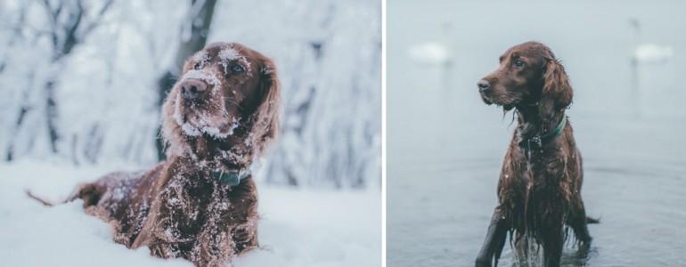 Sejtelmes fotók egy kutyusról, akinek mindene a természet