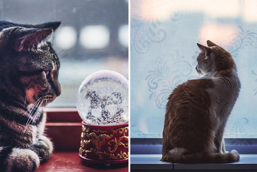 Mit csinálnak télen a cicák? Itt egy fotósorozat, amiből kiderül!