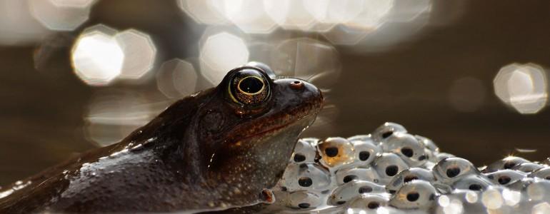 Íme az idei év legszebb magyar természetfotói