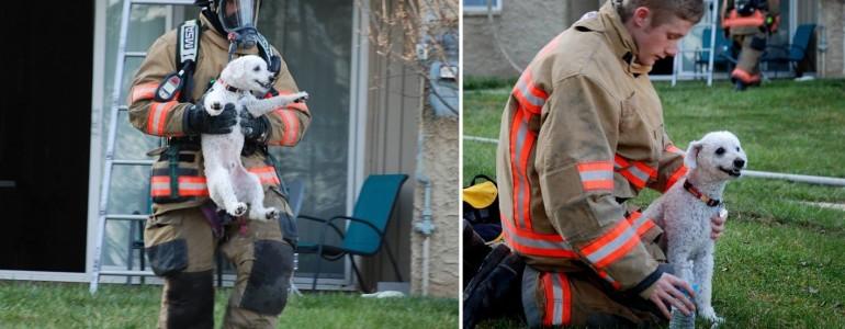 Hatalmas mosollyal köszönte meg a kutyus, hogy kimentették az égő házból