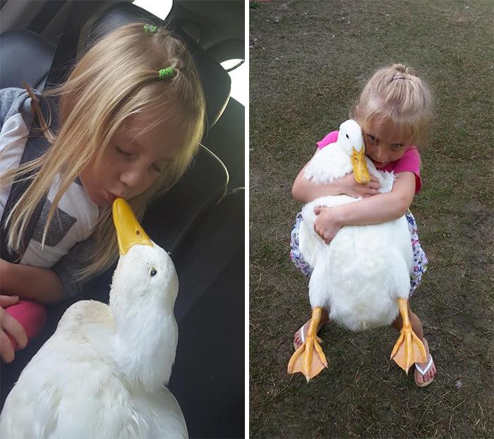Ennek az 5 éves kislánynak egy kacsa a legjobb barátja, és mindent együtt csinálnak