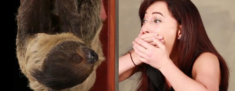 Így reagált a lajhárimádó lány, aki életében először találkozhatott kedvenc állatával