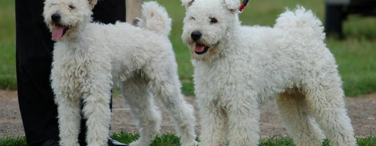 Megszüntette a nem magyar kutyafajták tenyésztőinek állami felügyeletét a parlament