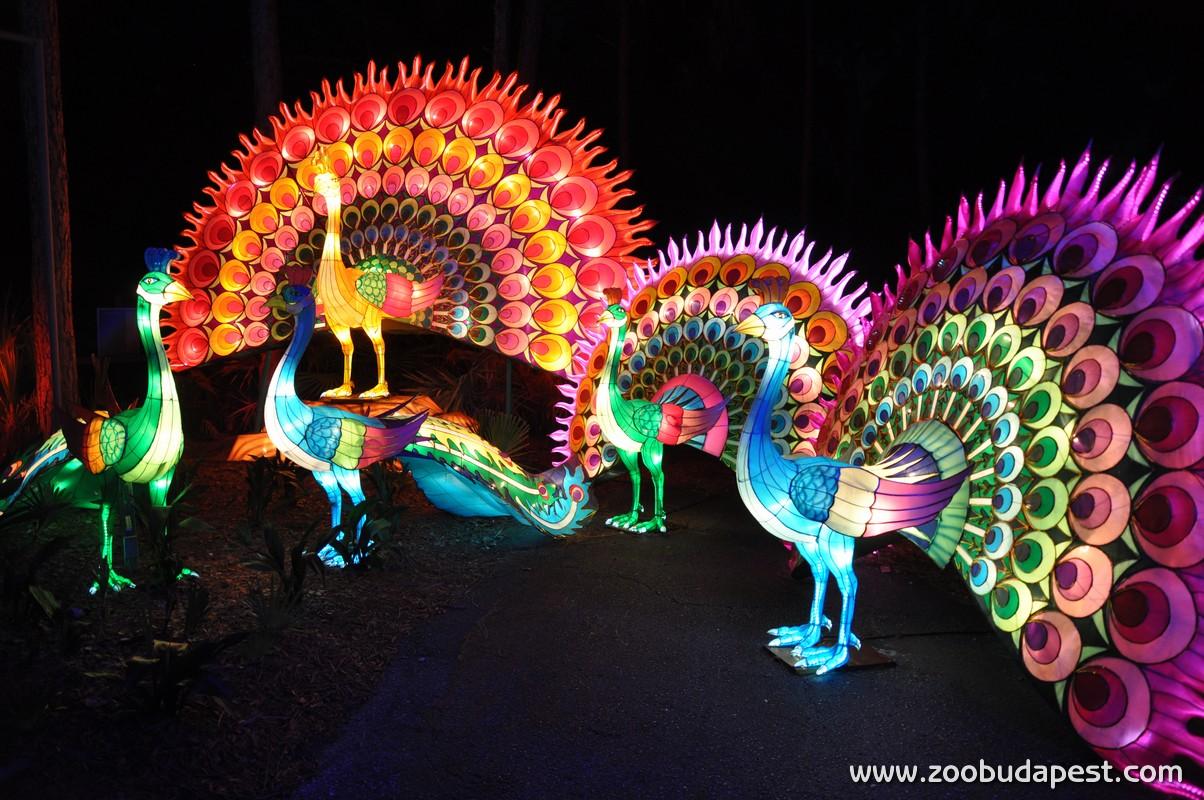 Sárkányok éjszakái a budapesti állatkertben