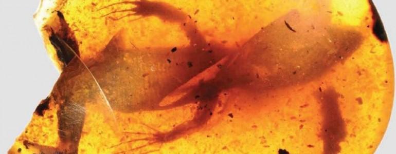Borostyánkőbe zárt gyíkok 99 millió éves kövületét azonosították amerikai tudósok