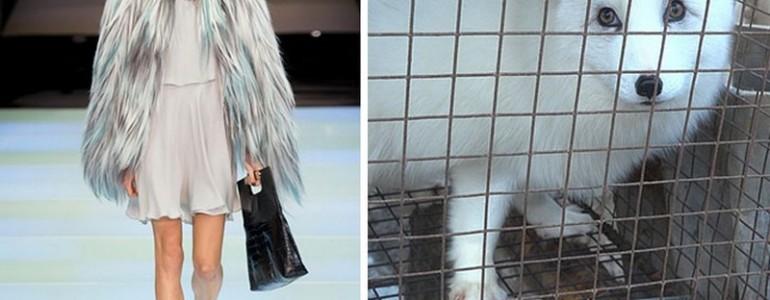 Az Armani bejelentette: többé nem használ fel állati szőrmét
