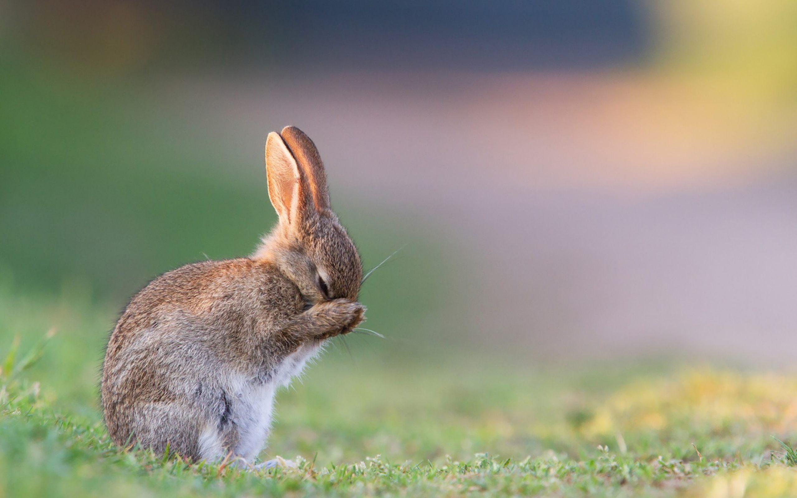 Az állat nem játék – ezért ne fogadj örökbe nyulat húsvétra!