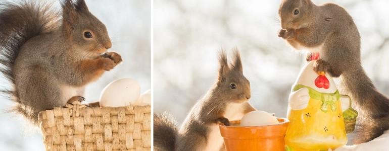 Vidám húsvéti fotók tojásokkal játszó mókusokról