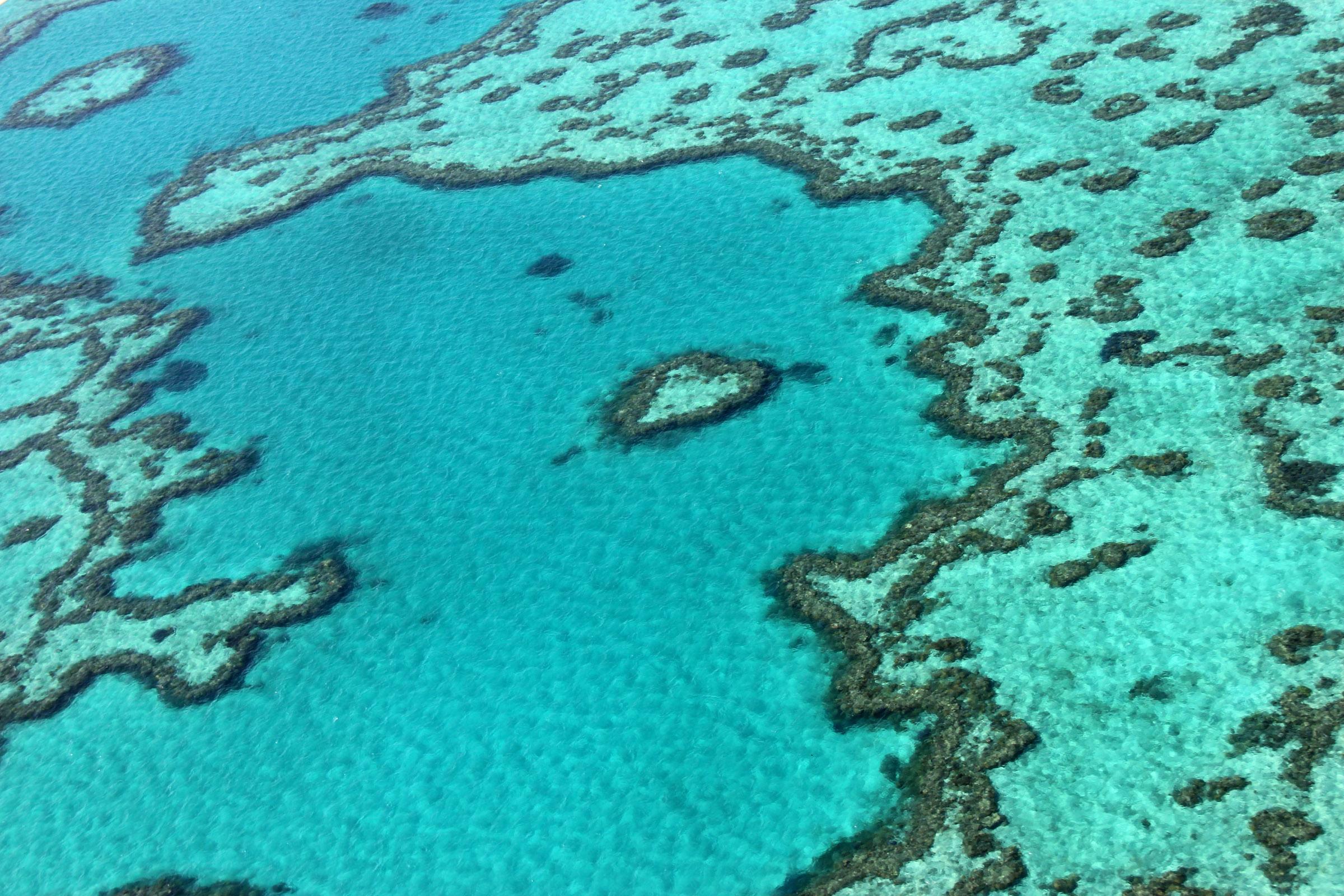 Legmagasabb riasztási szint a korallfehéredés miatt az ausztrál Nagy-korallzátonynál