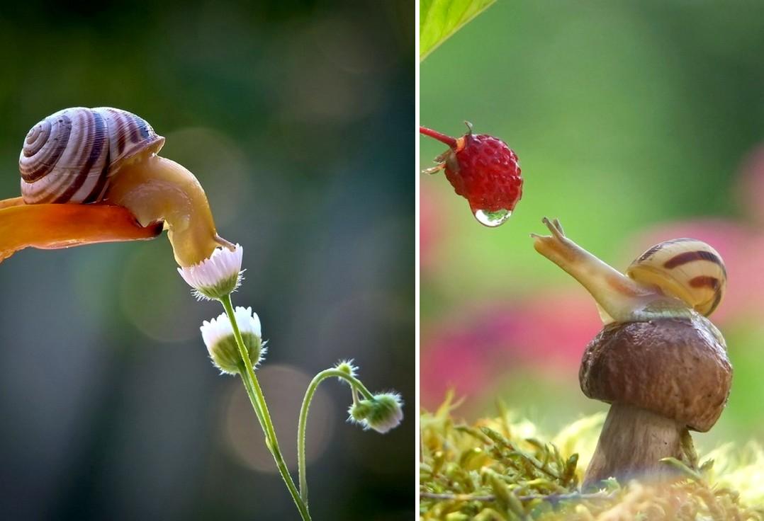 20 varázslatos fotó, amitől azonnal megszereted a csigákat