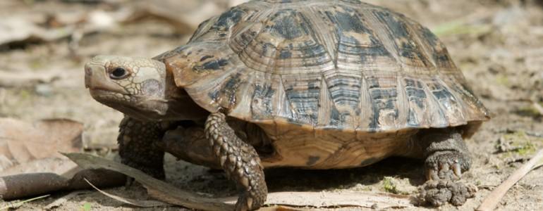 Csempészektől mentették meg a teknősöket