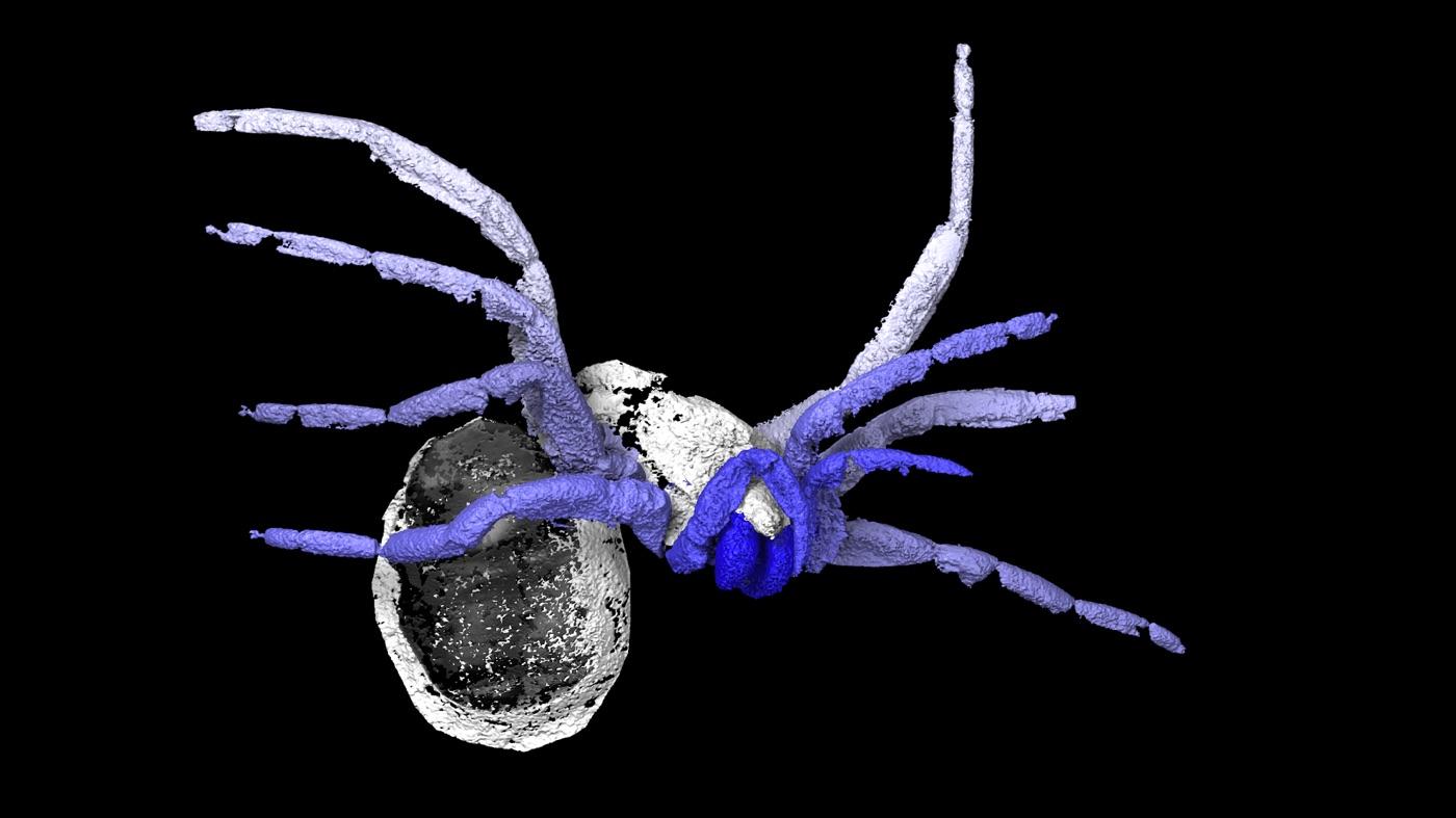 A modern pókok 305 millió évvel ezelőtt élt legközelebbi rokonát azonosították