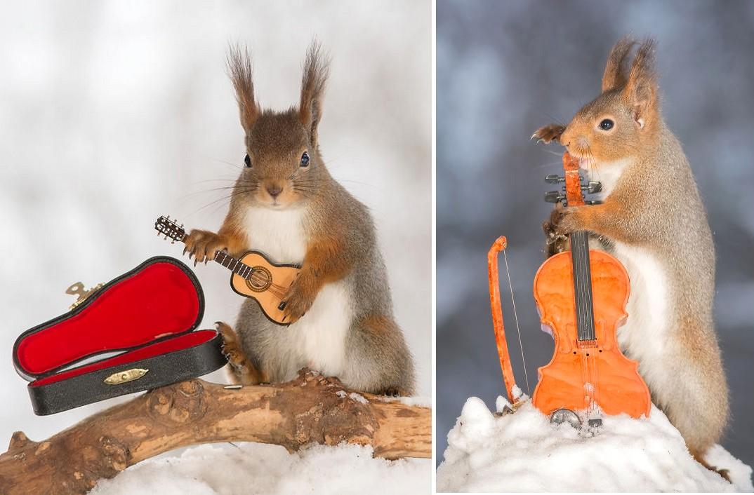 Apró hangszereken zenélő mókusokkal a te napod is sokkal szebb lesz