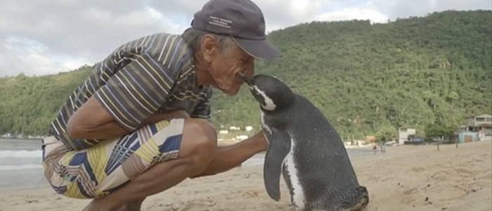 Minden évben több ezer kilométert tesz meg a pingvin, hogy meglátogassa megmentőjét