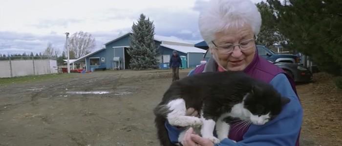 Több száz halálra ítélt cica menekül meg egy különleges programnak köszönhetően