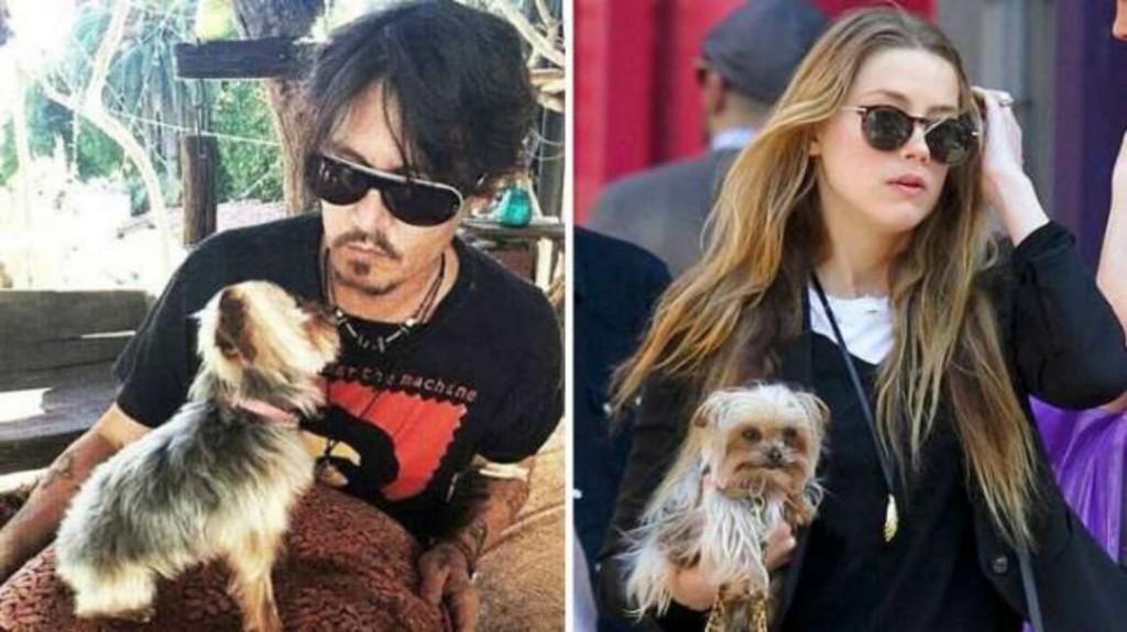 Johnny Depp felesége megúszta, hogy elítéljék kutyái Ausztráliába csempészéséért