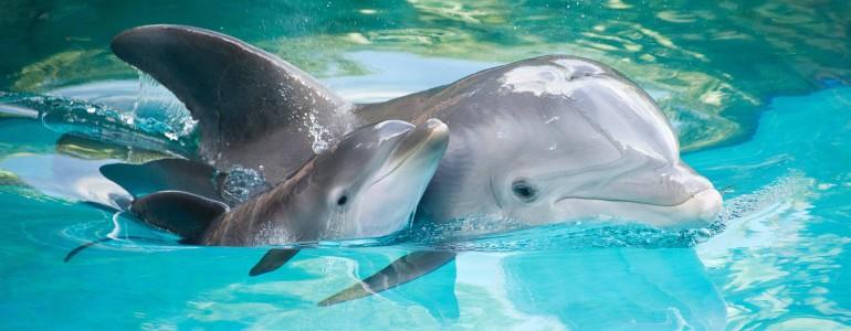 Az olajkatasztrófa miatt emelkedett az újszülött delfinek halálozási aránya