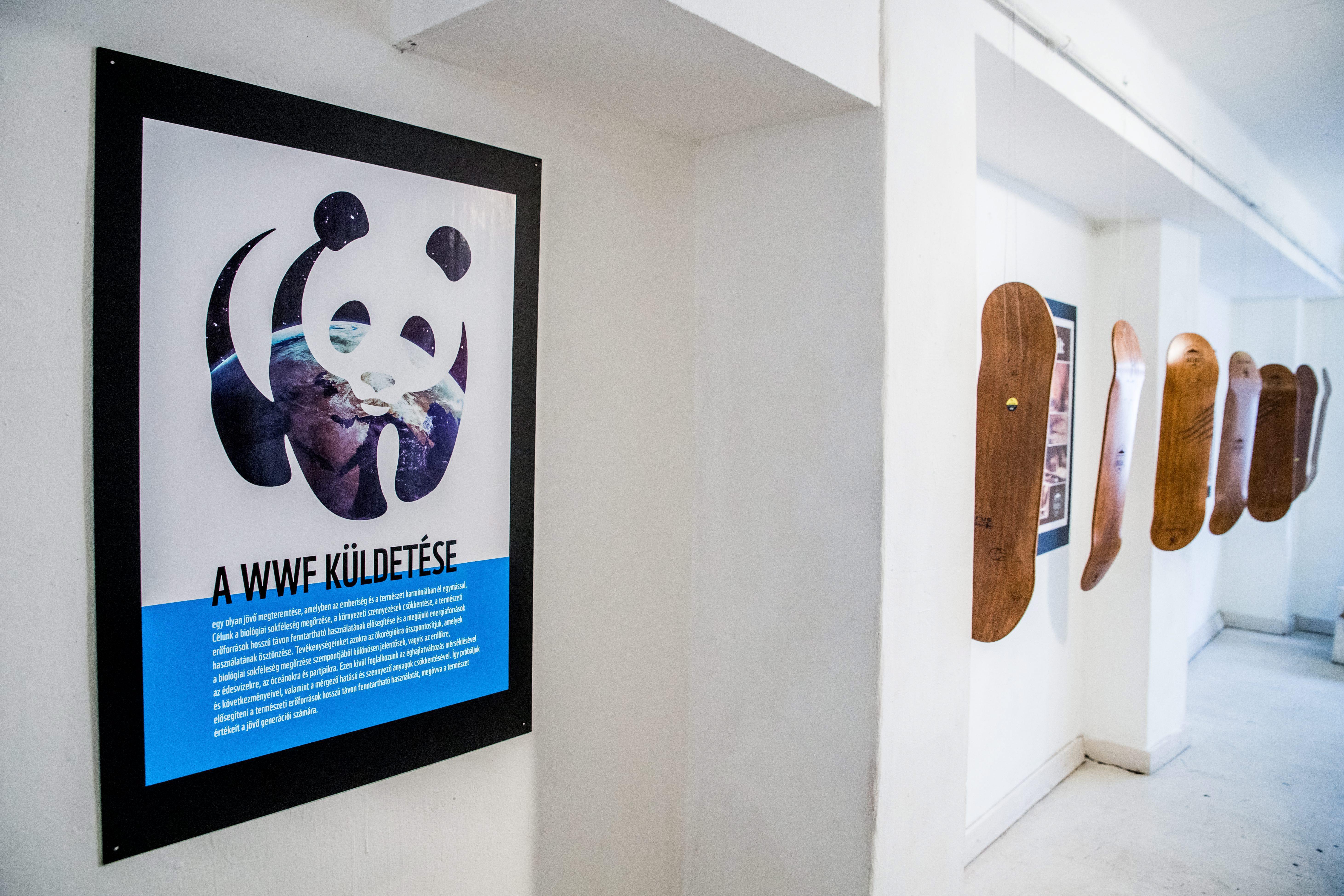 """Medvék """"tervezte"""" műalkotásokból nyílt kiállítás"""