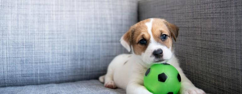 Mi a kutyusod kedvenc játéka? Ezt árulja el a személyiségéről!