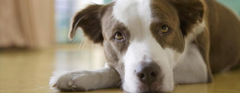 Több mint húsz állatvédelmi szervezettel kezdett konzultációt az igazságügyi tárca