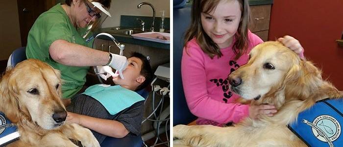 Golden retriever nyugtatja a kis pácienseket ebben a fogászati rendelőben