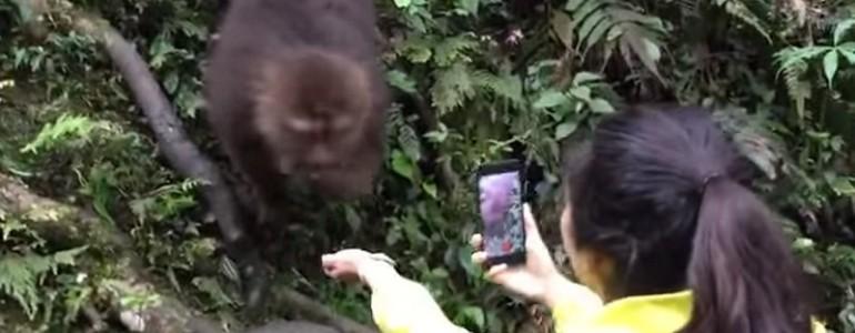 Csemegével kínálták, de ennek a majomnak inkább egy mobil kellett