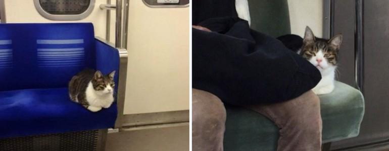 Minden nap metróval közlekedik ez az imádnivaló cica