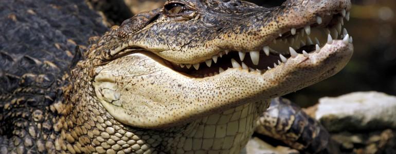 Krokodiltámadást élt túl egy kempingező Ausztráliában