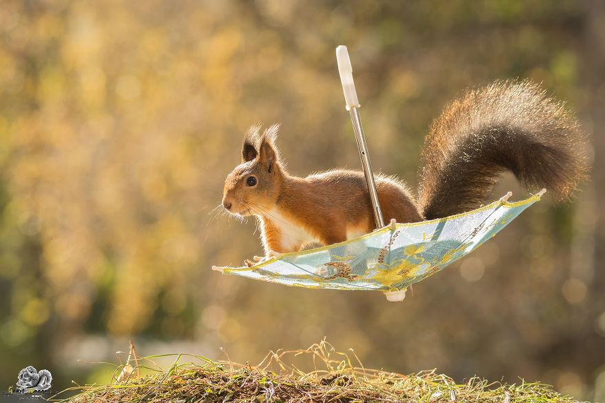 Aprócska esernyőkkel pózolnak a fotogén mókusok