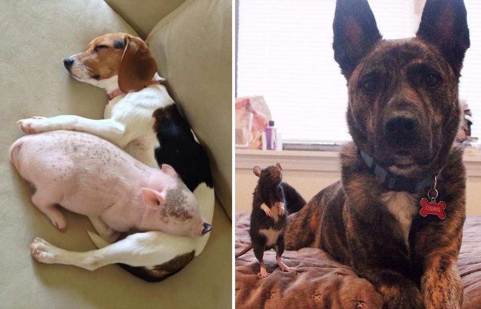 17 fotó, ami bizonyítja, hogy a kutyusok bármilyen élőlénnyel képesek összebarátkozni
