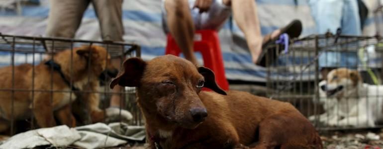 Tiltakoznak az állatvédők a dél-kínai kutyahúsfesztivál ellen