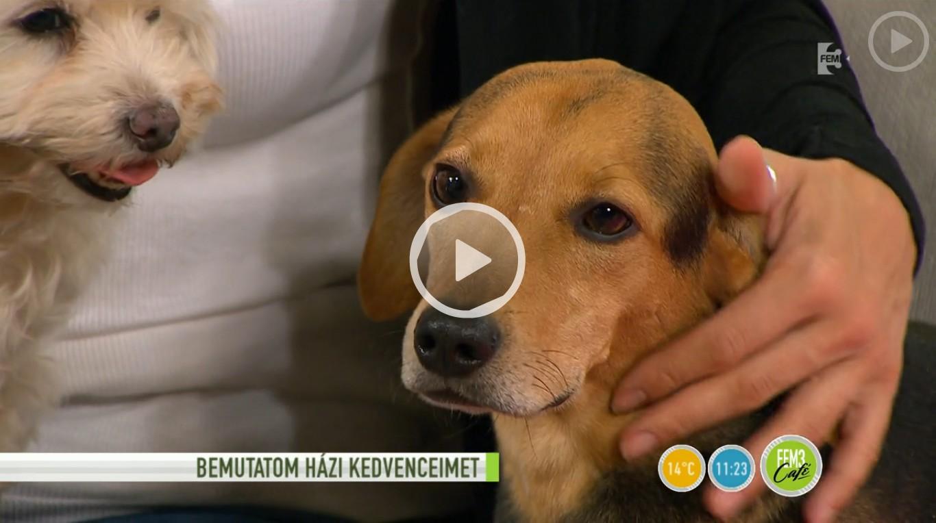 9 befogadott kutyával osztja meg otthonát Tornóczky Anita