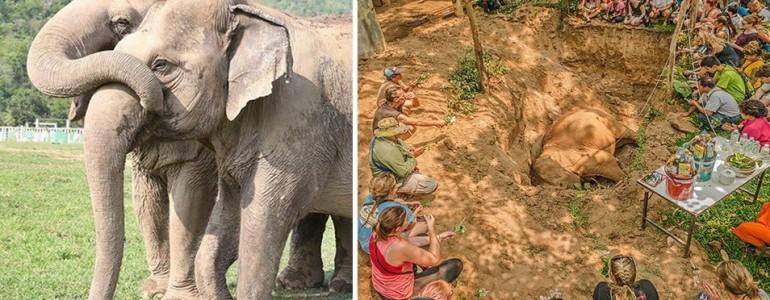 Megsiratta elhunyt lelki társát a vak elefánt