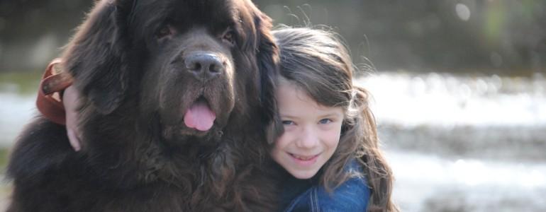 5 hatalmas kutyafajta, akinek a méreténél csak a szíve nagyobb