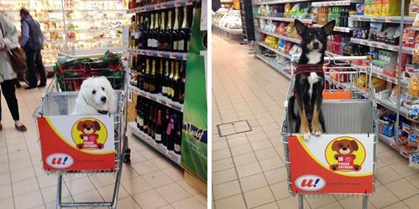 Kutyabarát bevásárlókocsikkal várja a gazdikat egy szupermarket