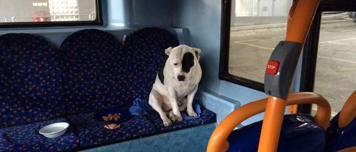 Egy buszon hagyták magára az összetört szívű kutyust