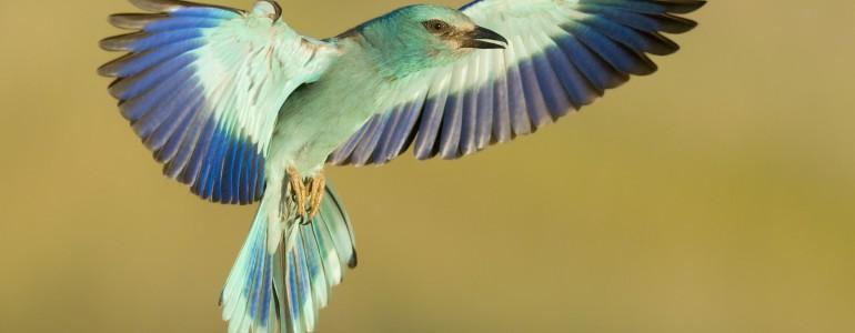 Csodálatos védett madarak érkeztek a Bükkbe