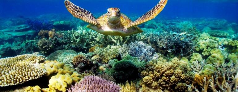 Tízmilliárd dollárra van szükség az ausztrál Nagy-korallzátony megmentéséhez