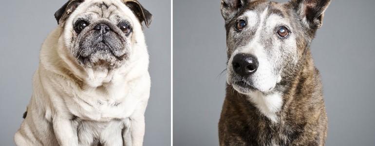 Gyönyörű képsorozattal ad új esélyt az öreg menhelyi kutyusoknak ez a fotós