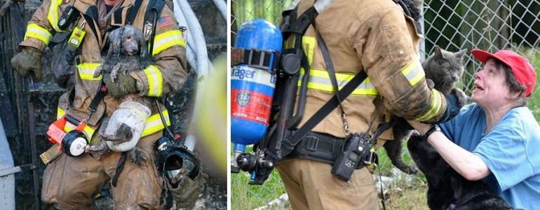 25 tűzoltó, aki életét kockáztatta, hogy megmentsen egy állatot